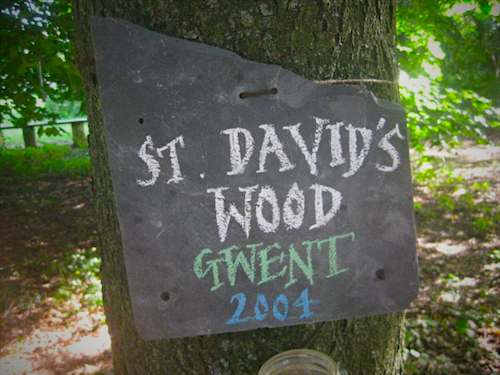 Davids_wood