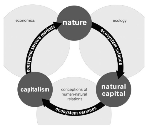theory of natural capital